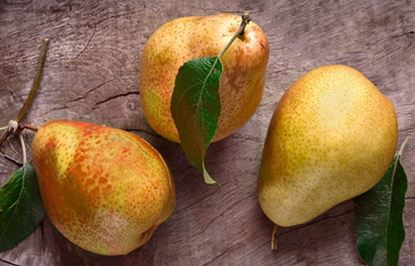 Picture of FRENCH PEAR SOAP
