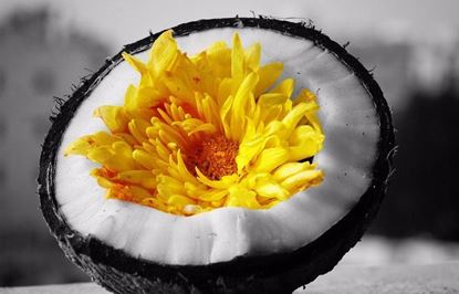 Picture of ORANGE FLOWER AND COCONUT SOAP